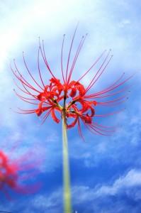 цветывау1